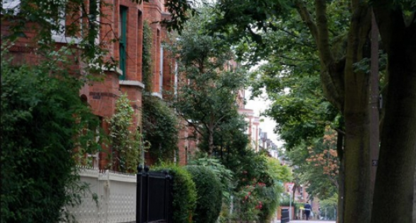 Avenue with trees - how to recognise the signs of ground heave